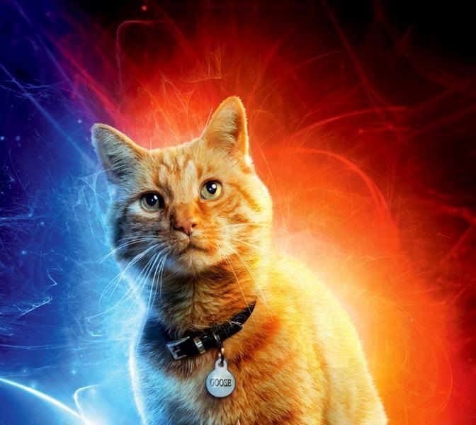 Gatto - Captain Marvel - Film Marvel 2019 - REgia  Anna Boden e Ryan Fleck - Trama - personaggi - recensione
