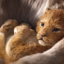 Il Re Leone - Film Disney 2019